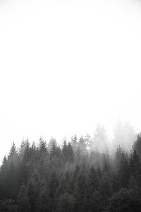 Walk through the forest - Poster von Studio Na.hili - Photocircle