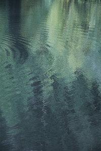 Forest in the lake - Poster von Studio Na.hili - Photocircle