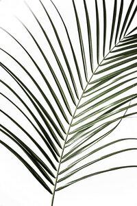 Palm Leaves 8 - Poster von Mareike Böhmer - Photocircle