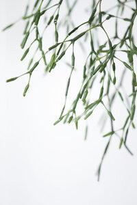Geo Plant - Poster von Studio Na.hili - Photocircle
