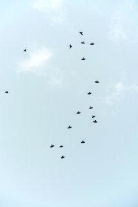 Birds Flying South - Poster von Studio Na.hili - Photocircle