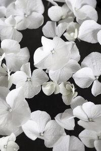 White beauty on black - Poster von Studio Na.hili - Photocircle
