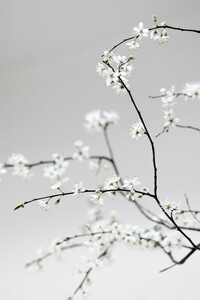 Spring is in the Air - Poster von Studio Na.hili - Photocircle