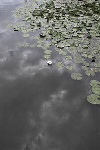 Water Lily Heaven - Poster von Studio Na.hili - Photocircle