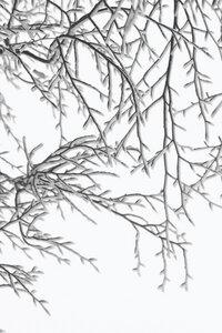 Snowy Days - Poster von Studio Na.hili - Photocircle
