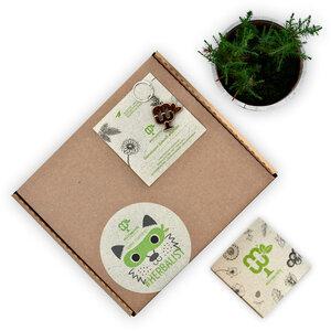 #HERBALIST-Starter Kit (3er Kräuter-Blumen-Pflanzset) - meinwoody
