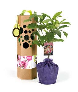 Magnolienbaum als Geschenk - SchenkeinBäumchen