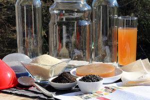 Kombucha Teepilz Komplettset - Starterset mit viel Zubehör - Natural-Kefir-Drinks