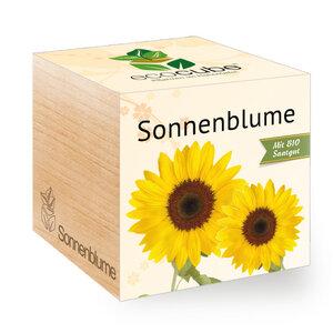 "Sonnenblume im Holzwürfel mit Bio-Samen - ""Ecocube"" - EcoCube"