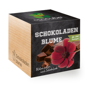 """Schokoladen-Blume im Holzwürfel mit Bio-Samen - """"Ecocube"""" - EcoCube"""