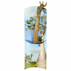 Baobab Setzling - Lebensbaum - S/M - Zimmerpflanze - MyBaobab - Végétaux d´Ailleurs