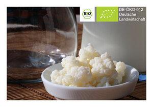 BIO Kefir / Milchkefir Getränk mit 8g Kefirknollen für 0,5L Kefirdrink - Natural-Kefir-Drinks