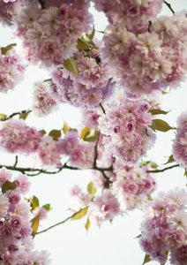 Blush Spring Love - Poster von Studio Na.hili - Photocircle