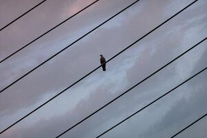 Bird on a Wire - Poster von AJ Schokora - Photocircle