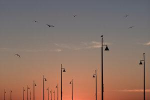 Birds on the Pier - Poster von AJ Schokora - Photocircle