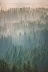 Oregon Forest Fog - Poster von AJ Schokora - Photocircle