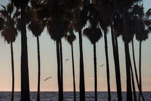 Palm Tree Sunset - Poster von AJ Schokora - Photocircle
