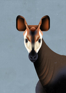Okapi - Poster von Dieter Braun - Photocircle