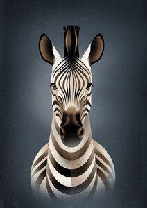 Zebra - Poster von Dieter Braun - Photocircle