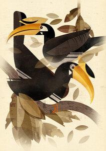 Nashornvogel - Poster von Dieter Braun - Photocircle