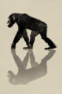 Schimpanse - Poster von Dieter Braun - Photocircle