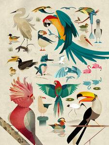 Vögel - Poster von Dieter Braun - Photocircle