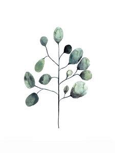 Mantika Botanical Eukalyptus - Poster von Christina Wolff - Photocircle