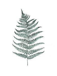 Mantika Botanical Silverfern - Poster von Christina Wolff - Photocircle