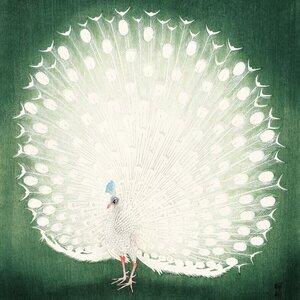 Pfau von Ohara Koson - Poster von Japanese Vintage Art - Photocircle