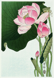 Blühende Lotusblumen von Ohara Koson - Poster von Japanese Vintage Art - Photocircle