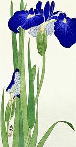 Irisblumen von Ohara Koson - Poster von Japanese Vintage Art - Photocircle