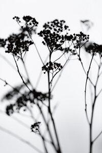 Silhouettes 4 - Poster von Mareike Böhmer - Photocircle