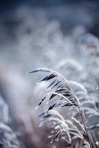 Frosty Morning 5 - Poster von Mareike Böhmer - Photocircle