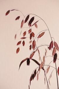 Grass 21X - Poster von Mareike Böhmer - Photocircle