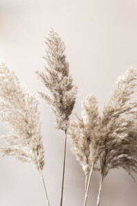 Grass 23 - Poster von Mareike Böhmer - Photocircle