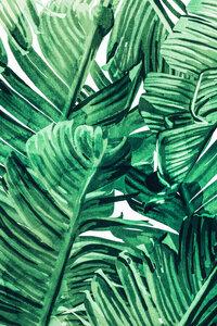 Tropical State of Mind - Poster von Uma Gokhale - Photocircle
