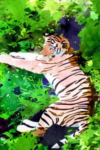 Blush Tiger - Poster von Uma Gokhale - Photocircle