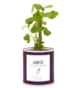 Pflanzen in der Dose - Lakritz / Süßholz - MacFlowers