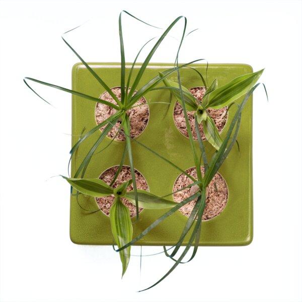 FlowerBox - FlowerBox Ceramic 4 in Grün mit Elefantenfuß ...