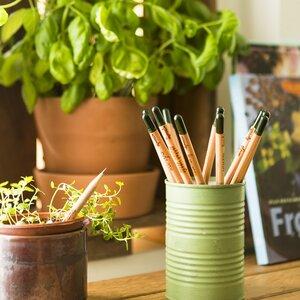 Buntstift  zum Einpflanzen - Sprout