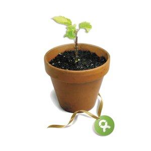 10 junge Bäume - OxfamUnverpackt