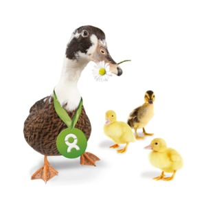 Entenfamilie (Muttertagskarte) - OxfamUnverpackt