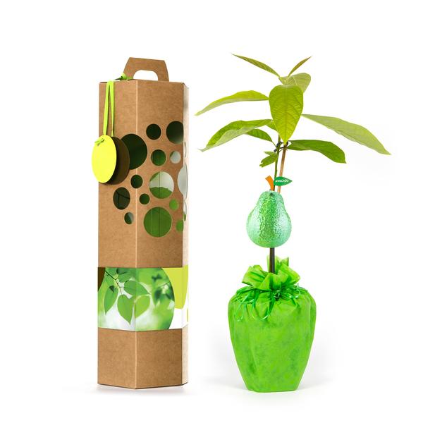 schenkeinb umchen avocadob umchen avocadostore. Black Bedroom Furniture Sets. Home Design Ideas