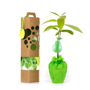 schenkeinb umchen b ume pflanzen mit avocado store. Black Bedroom Furniture Sets. Home Design Ideas