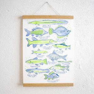 Set / Heimische Fische Poster + Posterleiste Eiche A3 - Kleinwaren / von Laufenberg