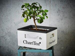 ChariTea Gartenkiste / Hochbeet - LemonAid