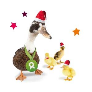 Entenfamilie (Weihnachten) - OxfamUnverpackt