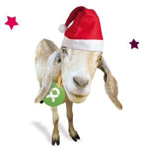 Ziege (Weihnachten) - OxfamUnverpackt