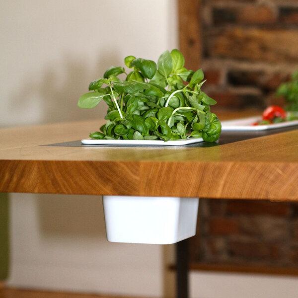 Greenhaus pflanztisch 200x100 cm eiche vollholz esstisch for Design esstisch vollholz