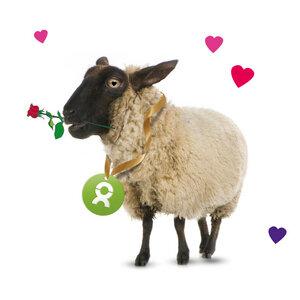 Schaf (Valentinskarte) - OxfamUnverpackt